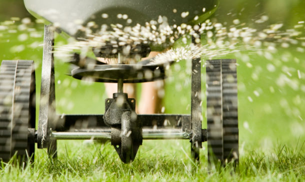 Close up of spreading fertilizer on a lawn
